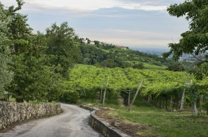 dreamstime_s_Valpolicella_winery_amarone