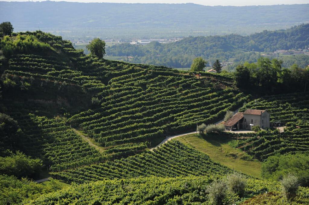 Prosecco Wine Road