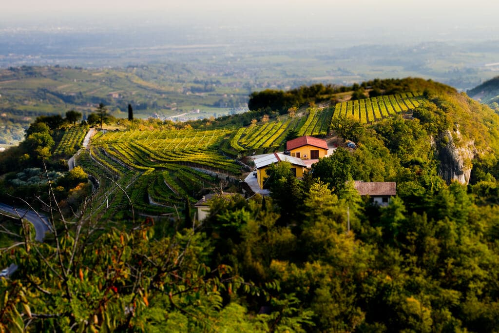 Valpolicella vineyards