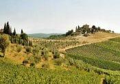 chanti wine