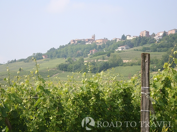 Nebbiolo vineyard View of the hill town of La Morra from the nearby vineyards.